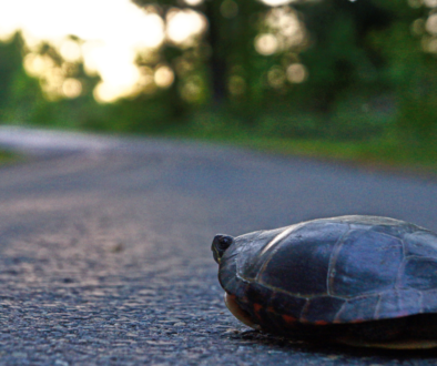 Race to the White House: Tortoise and the Hare?