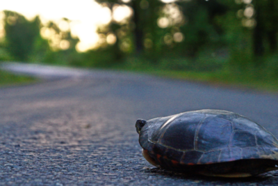 Controversial Race to the White House: Tortoise and the Hare?